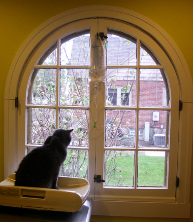 Exam - Arched Window